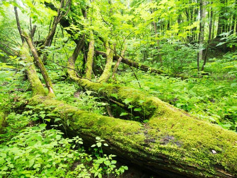 Vårskogplats royaltyfri bild