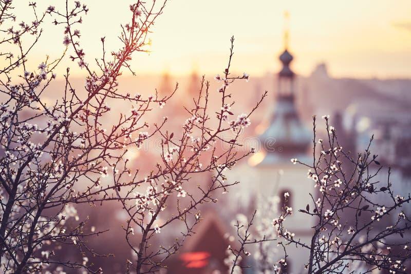 Vårsoluppgång i Prague arkivbilder