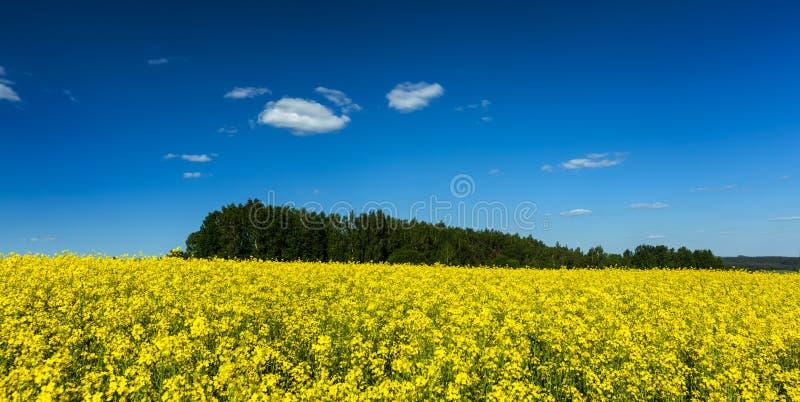 Vårsommarbakgrund - våldta löst med blå himmel royaltyfria foton