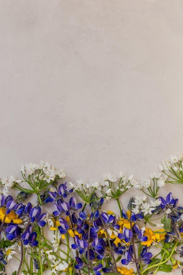 Vårtexturbegrepp Vårblommor på ett ljust - grå tabletop royaltyfri foto