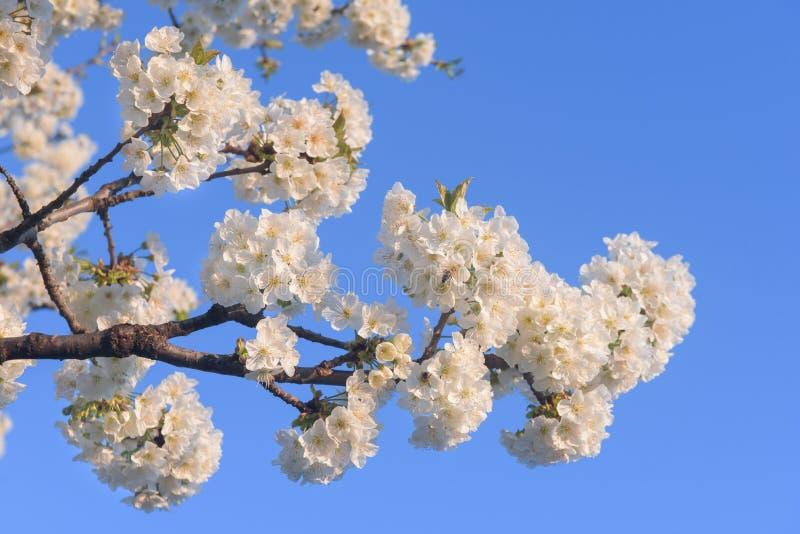 Vårtid, blommor på blå himmel royaltyfri fotografi