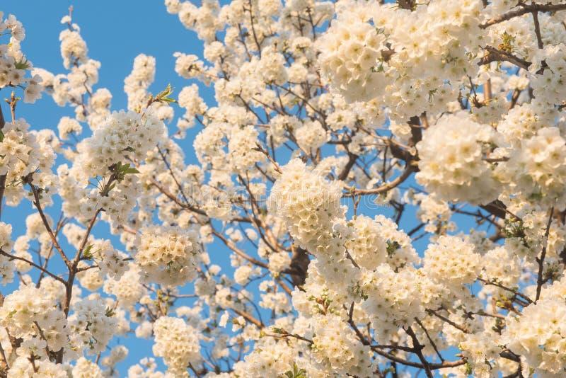Vårtid, blommor på blå himmel arkivbilder