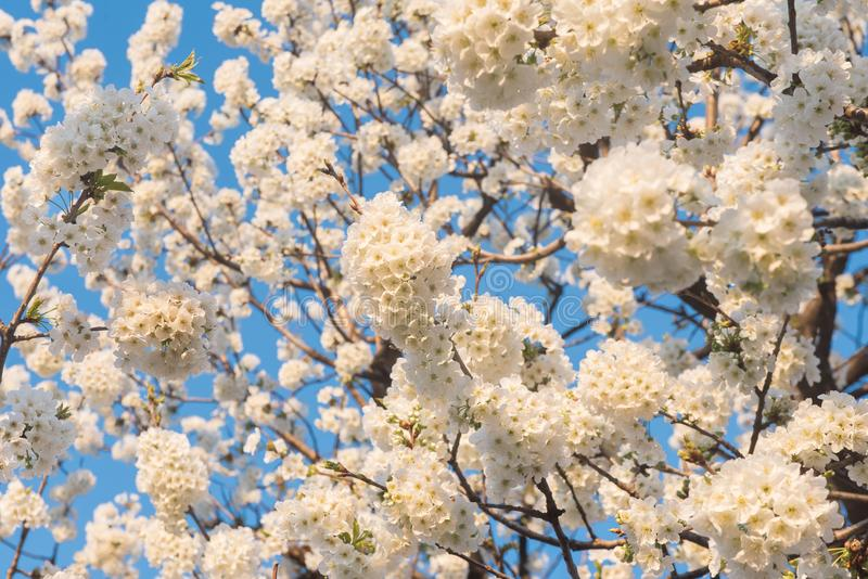 Vårtid, blommor på blå himmel royaltyfria foton