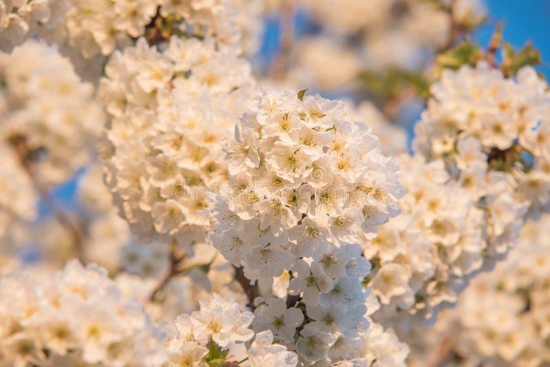 Vårtid, closeup på blommor fotografering för bildbyråer