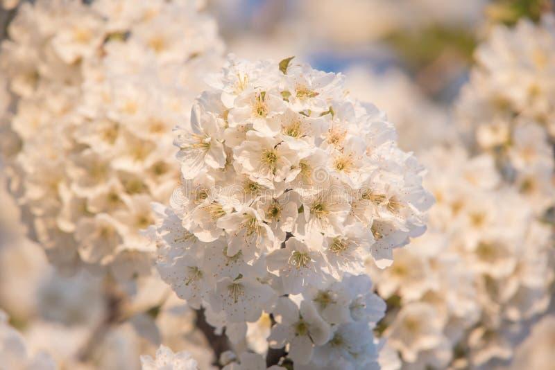 Vårtid, closeup på blommor arkivbilder