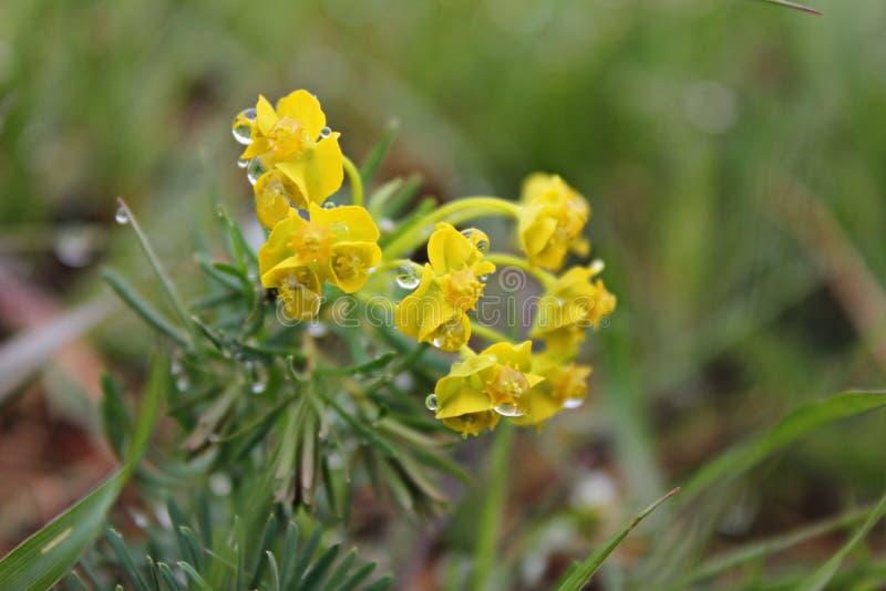 Vårtid - gulingblommor arkivfoto