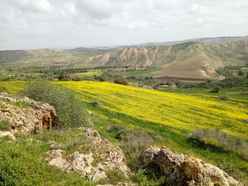 Vårtid i Algeriet royaltyfri fotografi