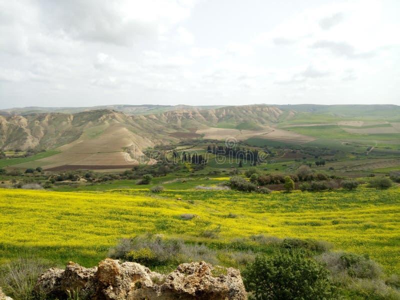 Vårtid i Algeriet royaltyfria bilder