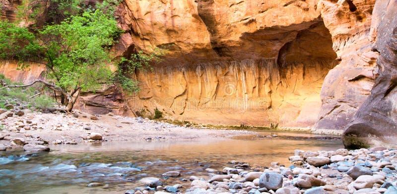 Vårtid i trånga passet på Zion National Park arkivbild