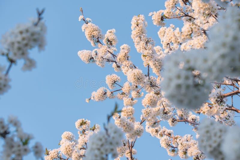 Vårtid, selektiv fokus fotografering för bildbyråer