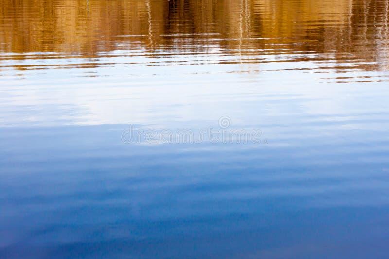 Vårträd som reflekterar i vattnet royaltyfria foton