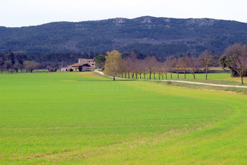 Vårvete, lantgårdhus, vit grusväg och kala träd, Luberon, Frankrike arkivfoton