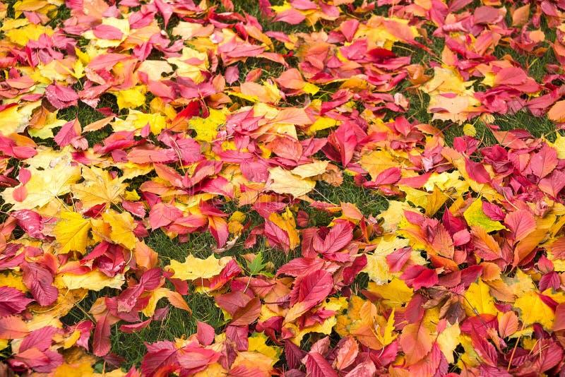 Våt färgrik höstlövverk som ligger på gräset royaltyfri foto