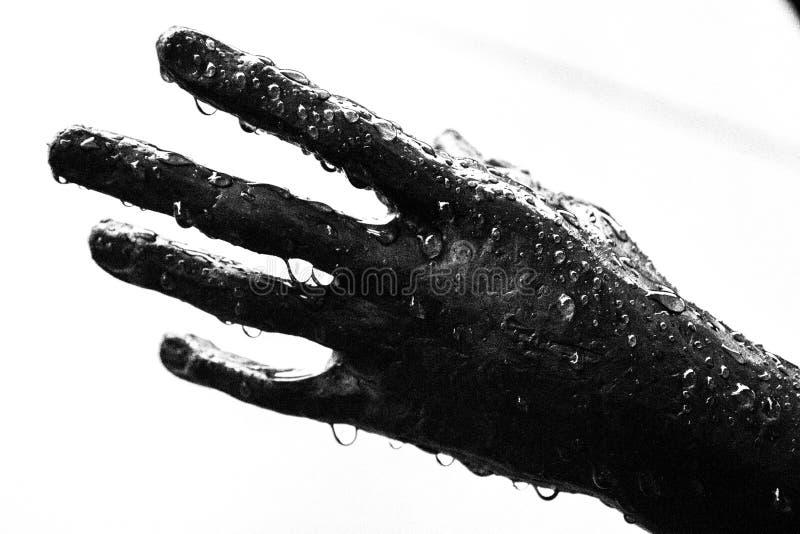 våt hand royaltyfri foto