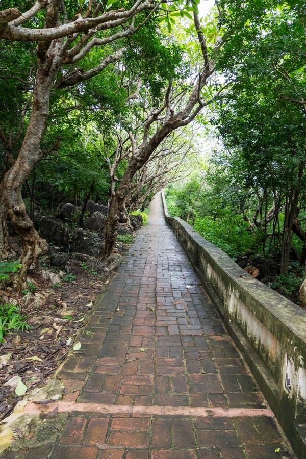 Våt och hal tegelstenbana i tropisk skog royaltyfria bilder