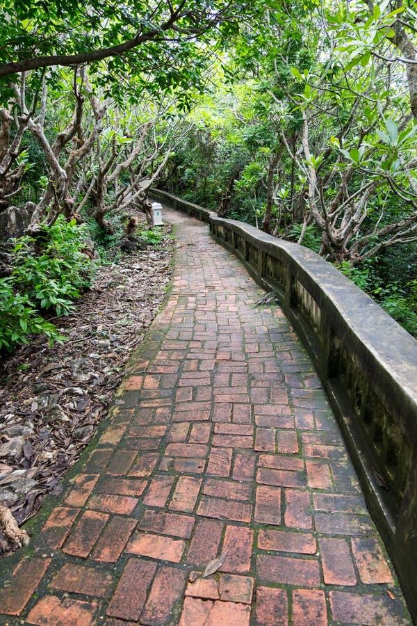 Våt och hal tegelstenbana i tropisk skog arkivfoton