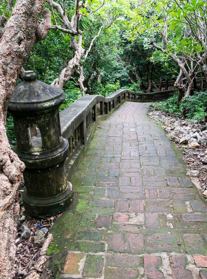 Våt och hal tegelstenbana i tropisk skog arkivbilder