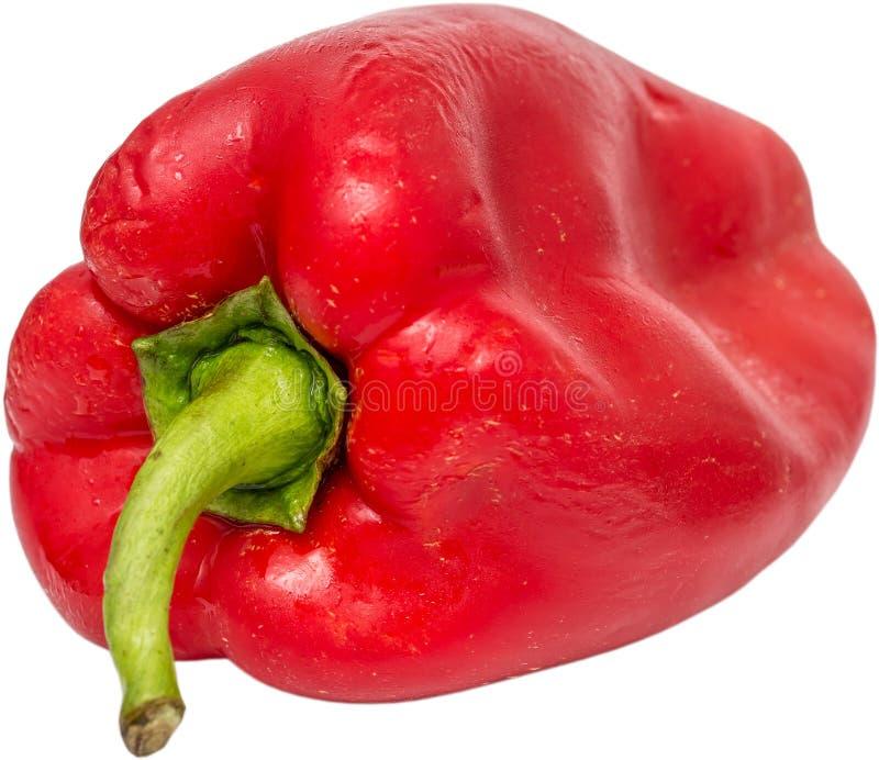 Våt paprika
