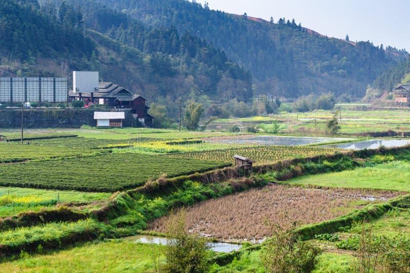 våt risfält och tekoloni i Chengyang arkivbild