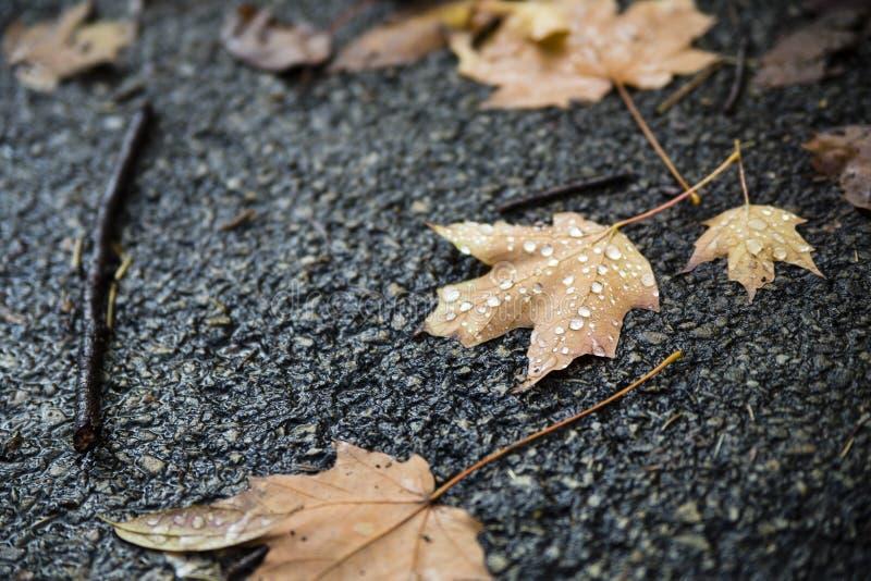 Våta Autumn Leaves på trottoar arkivbild
