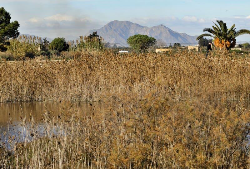 Våta länder nära de Segura flodbankerna i Guardamar, Alicante - Spanien royaltyfria foton