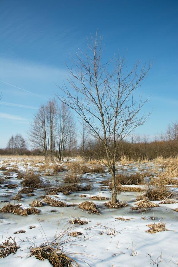 Våta områden som täckas med snö royaltyfria foton