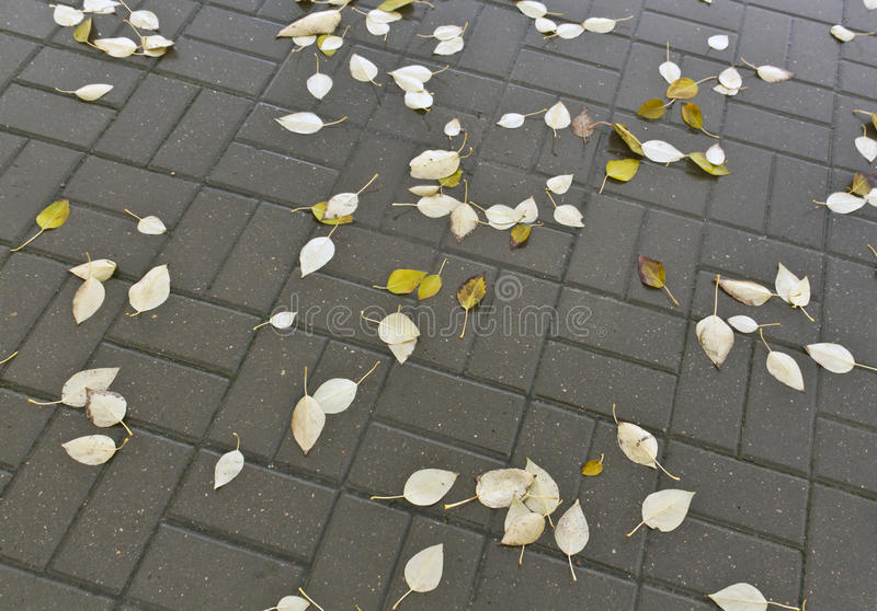 Våta sidor för stupad apelsin på trottoar royaltyfri fotografi