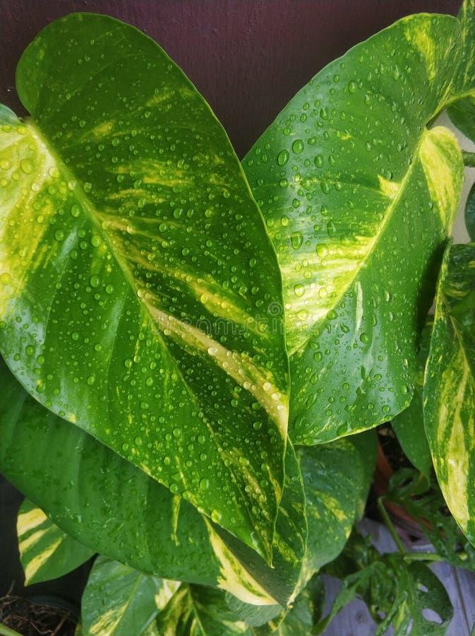 Våtgröna blad med vattendroppar arkivfoto