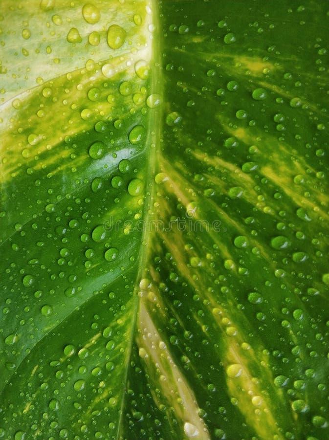 Våtgröna blad med vattendroppar arkivbild
