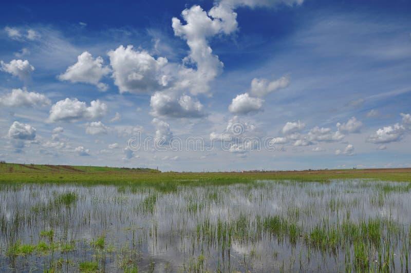 Våtmark fotografering för bildbyråer