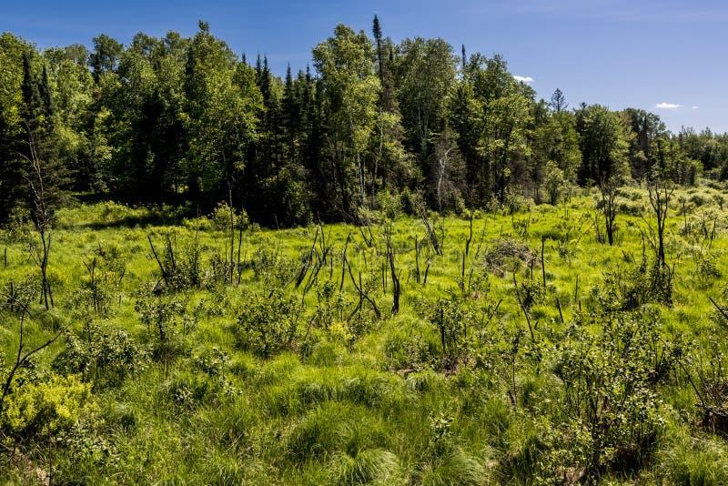 Våtmark i nordliga Wisconsin fotografering för bildbyråer