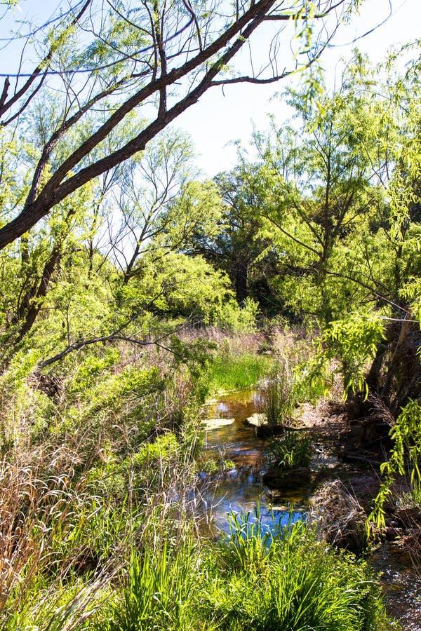 Våtmark på tjusat vaggar naturligt område för tillstånd i Texas royaltyfria foton