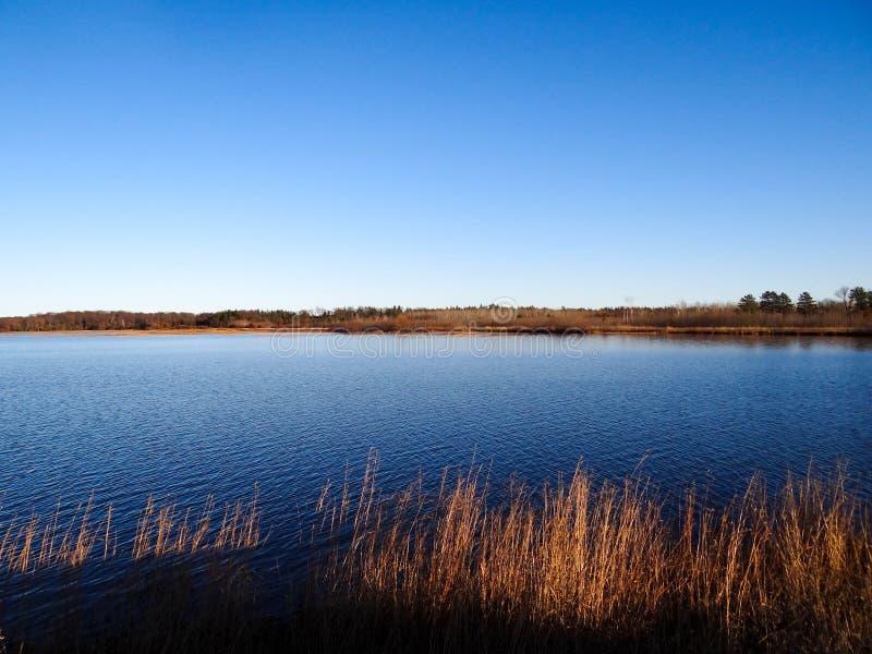 Våtmarkdamm med blå himmel och gräs arkivbilder