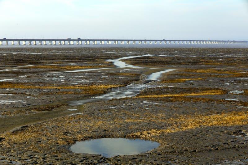 Våtmarken av hösten royaltyfri foto