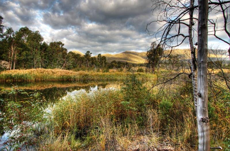 våtmarker royaltyfri fotografi