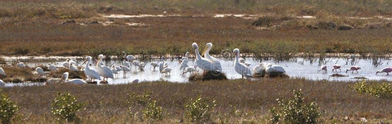 Våtmarkfågelfristad arkivfoton