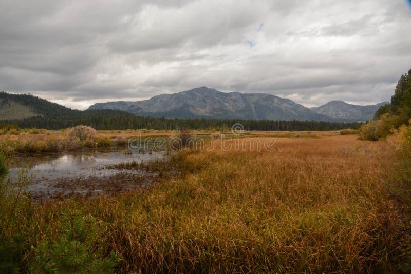 Våtmarkområde nära Lake Tahoe royaltyfria bilder