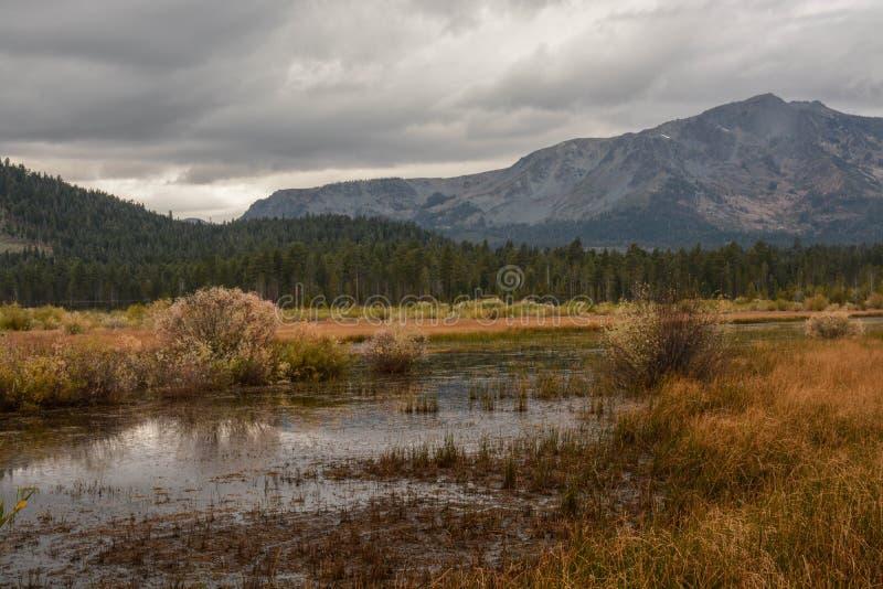 Våtmarkområde nära Lake Tahoe royaltyfri foto