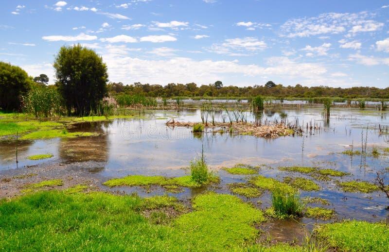 Våtmarkreserv i västra Australien arkivbild