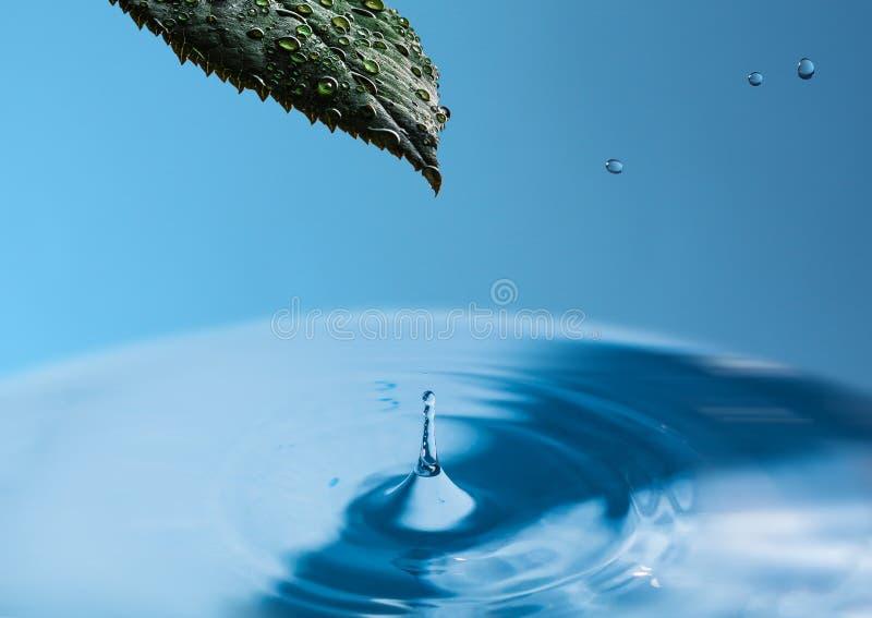 Vått nytt blad av växten ovanför vattenyttersidan med en färgstänk av vatten En droppe av vatten med ett grönt blad på en blå him arkivfoto