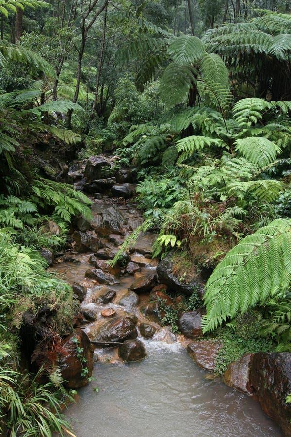 vått skogregn arkivbild