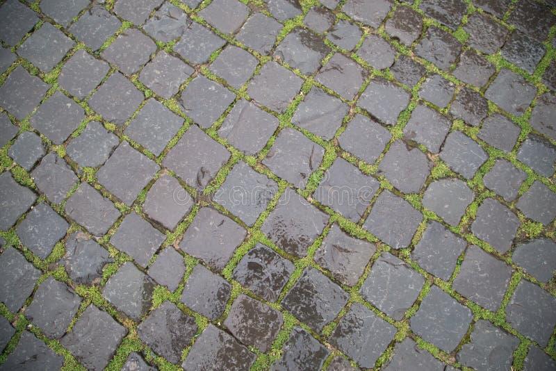 Vått stenväggräs fotografering för bildbyråer
