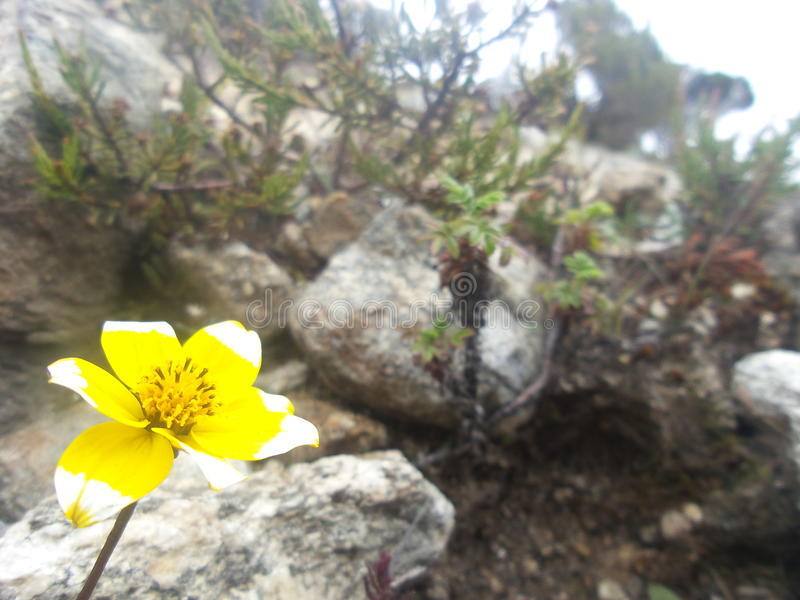 Végétation à plus de 4000 mètres images stock
