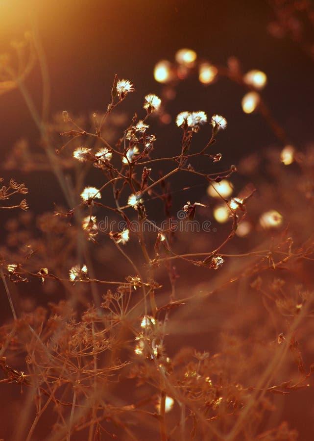 Végétation élégante dans un coucher du soleil chaud d'été, bokeh images stock