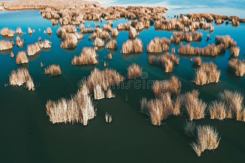 Végétation au rivage de la mer photo libre de droits