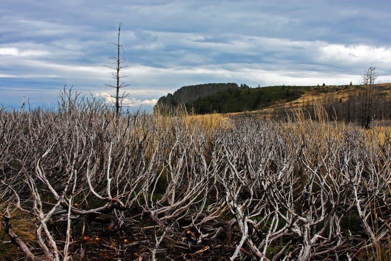 Végétation brûlée sur le chemin vers le haut de la montagne photos libres de droits