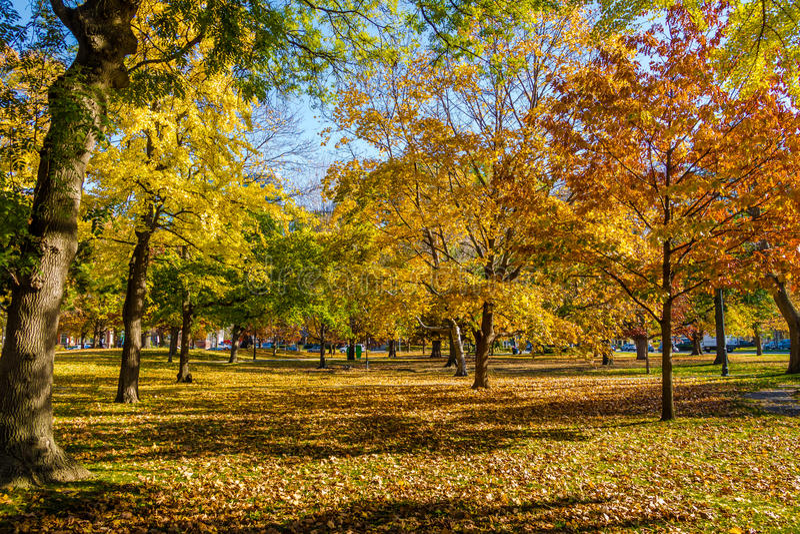 Végétation colorée d'automne de parc de la Reine - Toronto, Ontario, Canada photo libre de droits