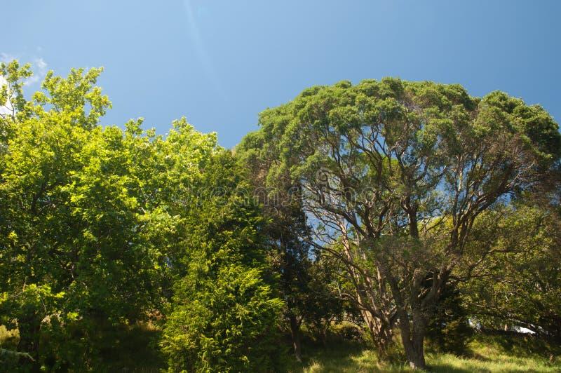 Végétation dans le bâti Éden photo libre de droits