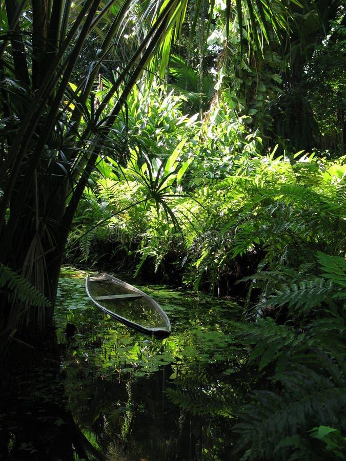végétation de canoë image stock