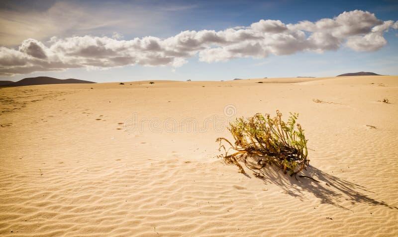 Végétation de désert images libres de droits